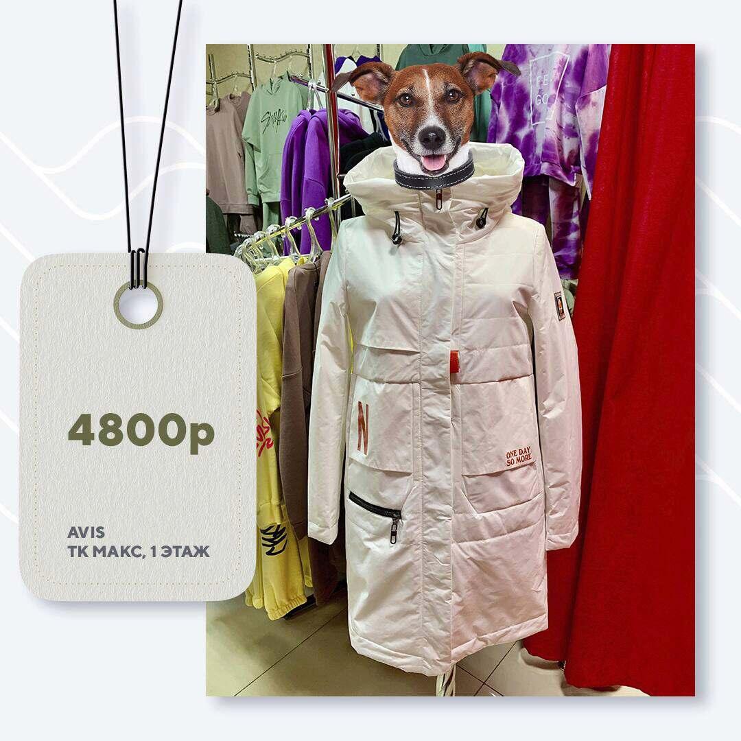 avis-4800