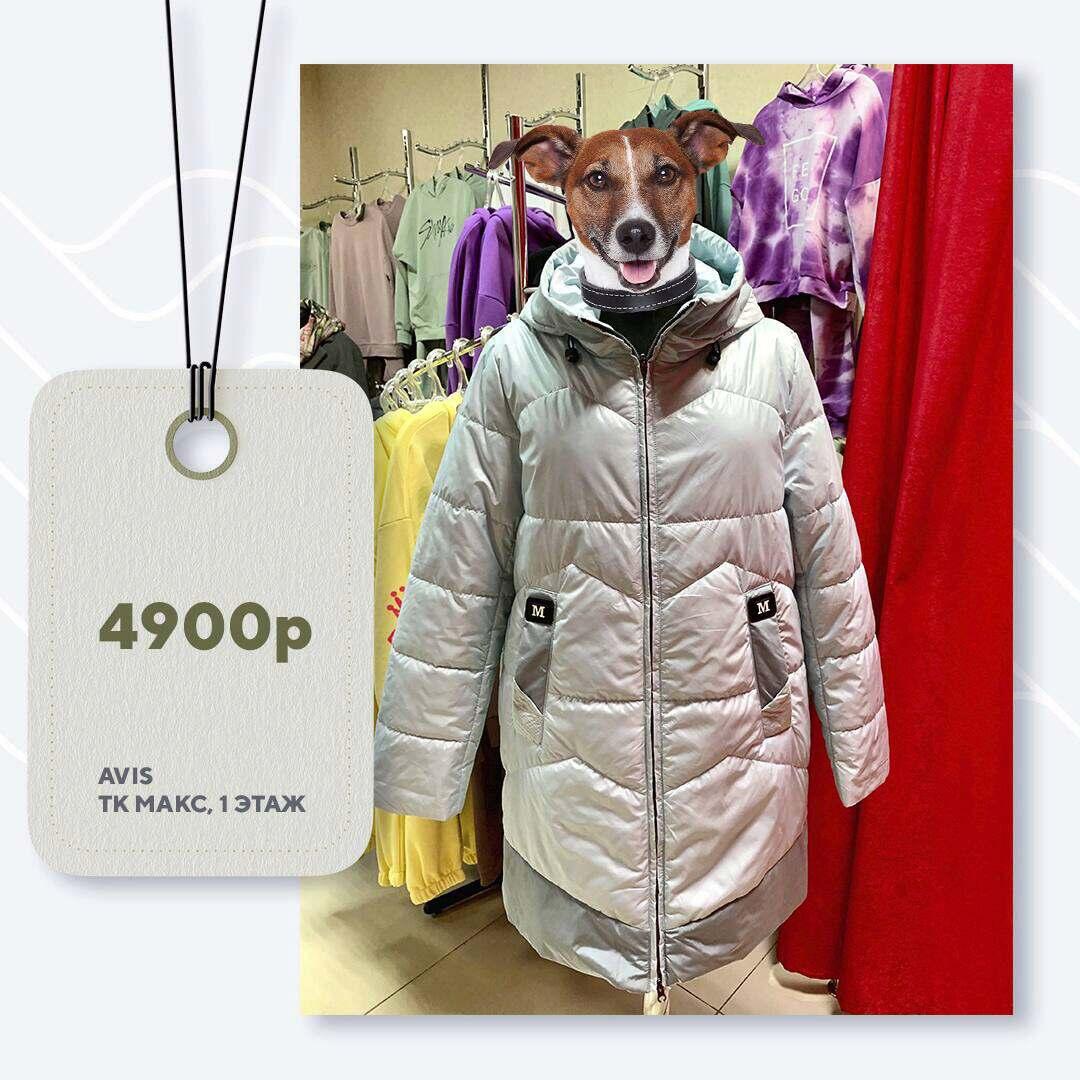 avis-4900