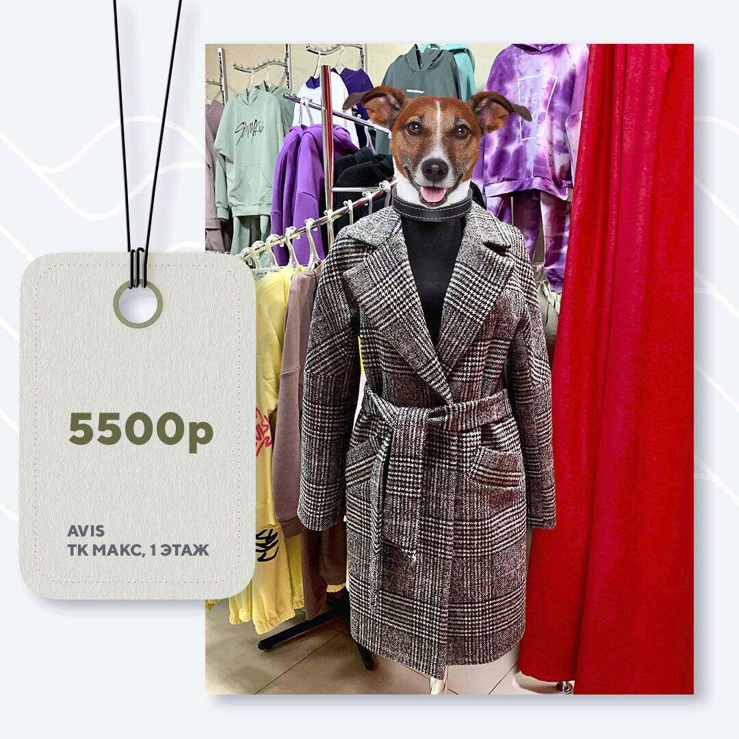 avis-5500